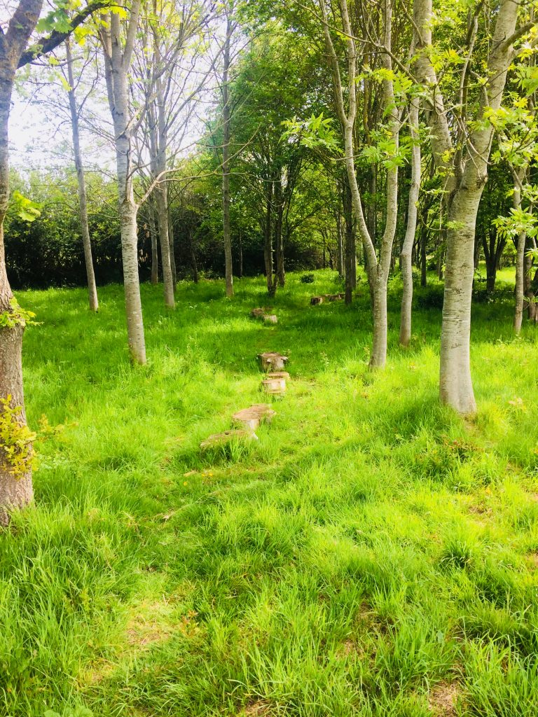 Stepping stones amongst the trees in Centenary Field.