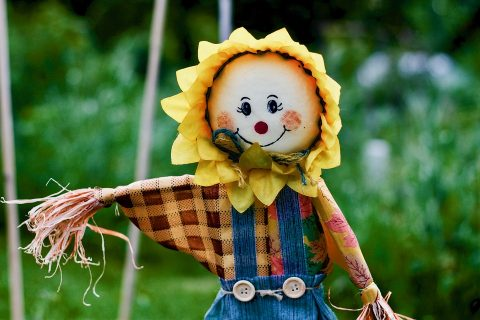 scarecrow with sunflower head