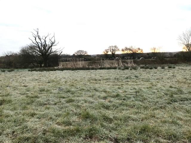Photo of frosty field