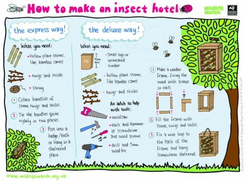 How to make a bug hotel instructions