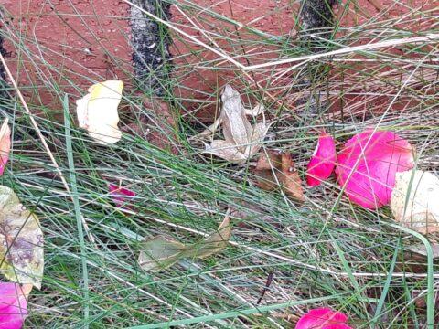 frog in garden